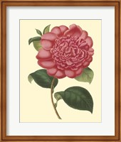 Camellia Garden I Fine Art Print
