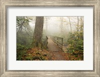 Alum Trail Fine Art Print