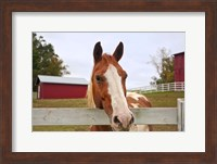 curious horse Fine Art Print