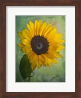 Yellow Sunflower Fine Art Print