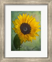 Yellow Sunflower Fine Art Print