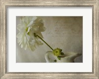 White In White Fine Art Print