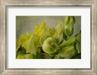 Yellow Snapdragons Fine Art Print