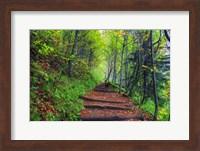 Appalachian Trail 3 Fine Art Print