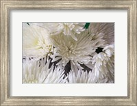Blooming White Fine Art Print