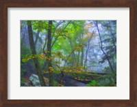 Roaring Fork Fog Fine Art Print
