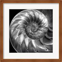 Nautilus 4 Fine Art Print