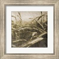 Wheat Fields Fine Art Print