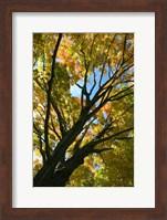 Autumn Maple Vertical Fine Art Print