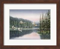 Swans At Sunrise Fine Art Print
