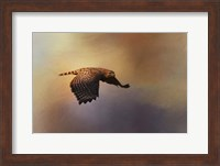 Coming In For The Evening Fine Art Print