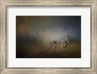 Coyote At Shiloh Fine Art Print