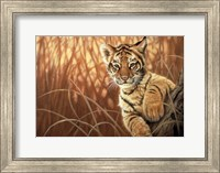 Pure Eyes Fine Art Print