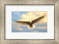 Bald Eagle Fine Art Print