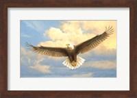 Bald Eagle Fine Art Print
