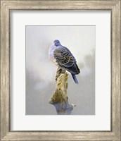 Turtle Dove Fine Art Print