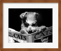 All About Cats Fine Art Print