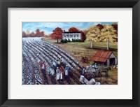 The Lincoln Cotton Field Fine Art Print