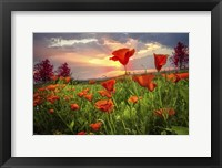 Sunrise Poppies Fine Art Print