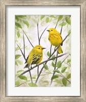 Springtime Warblers Fine Art Print