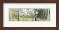 Birch Field Fine Art Print