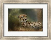 Napping In The Brush Fine Art Print