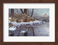 Creekside Fine Art Print