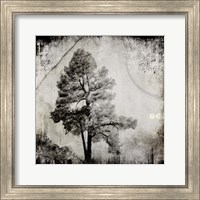 July Tree 12 Fine Art Print
