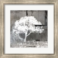 July Tree 9 Fine Art Print