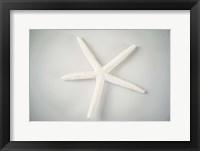 Sea Star 1 Fine Art Print
