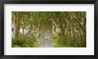The Dark Hedges, Ireland Fine Art Print