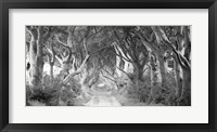 The Dark Hedges, Ireland (BW) Fine Art Print