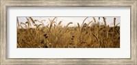 Prairie Grass in a Field Fine Art Print
