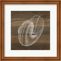Rustic Nautilus - White Fine Art Print