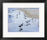 Many Birds Fine Art Print