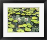 Lilly Pond Fine Art Print