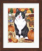 Harvest Cat Fine Art Print