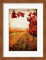 Autumn Vines Fine Art Print