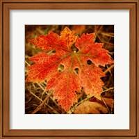 Ochre Foliage Fine Art Print