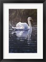 Swan Fine Art Print