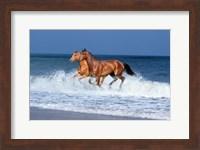 2 Horses Sea Fine Art Print