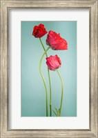 Blue poppy Fine Art Print