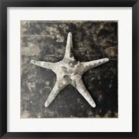 Marble Shell Series III Fine Art Print