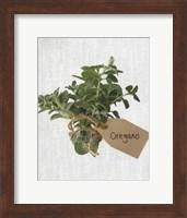 Oregano Fine Art Print