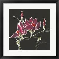 Magnolia on Black III Fine Art Print