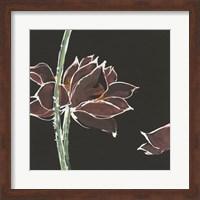Lotus on Black V Fine Art Print