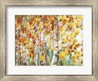 Watercolor Fall Aspens Fine Art Print