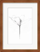 Pencil Floral XI Fine Art Print