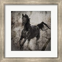 Gypsy Horse Collection V1 3 Fine Art Print