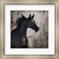 Gypsy Horse Collection V1 4 Fine Art Print